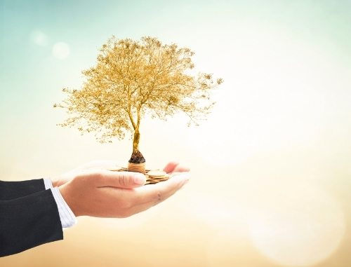 hands holding out coins and small tree with light background